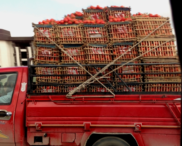 Tomatoes going to Cairo