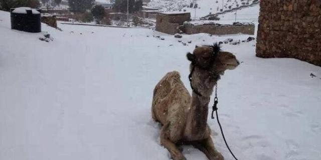 Snow Falls In Cairo For The First Time In More Than 100 Years[1]
