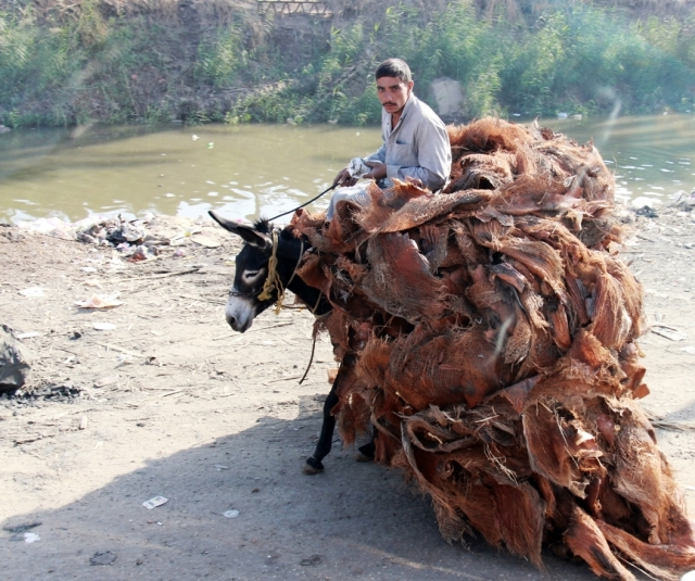 Transporting Bark of Palm Trees