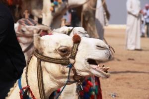 Egypt_1747-2