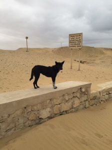 Is this dog visiting his ancestors? I photographed him in the Saqqaua area where the tombs were found